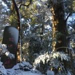 高尾登山 蛸杉