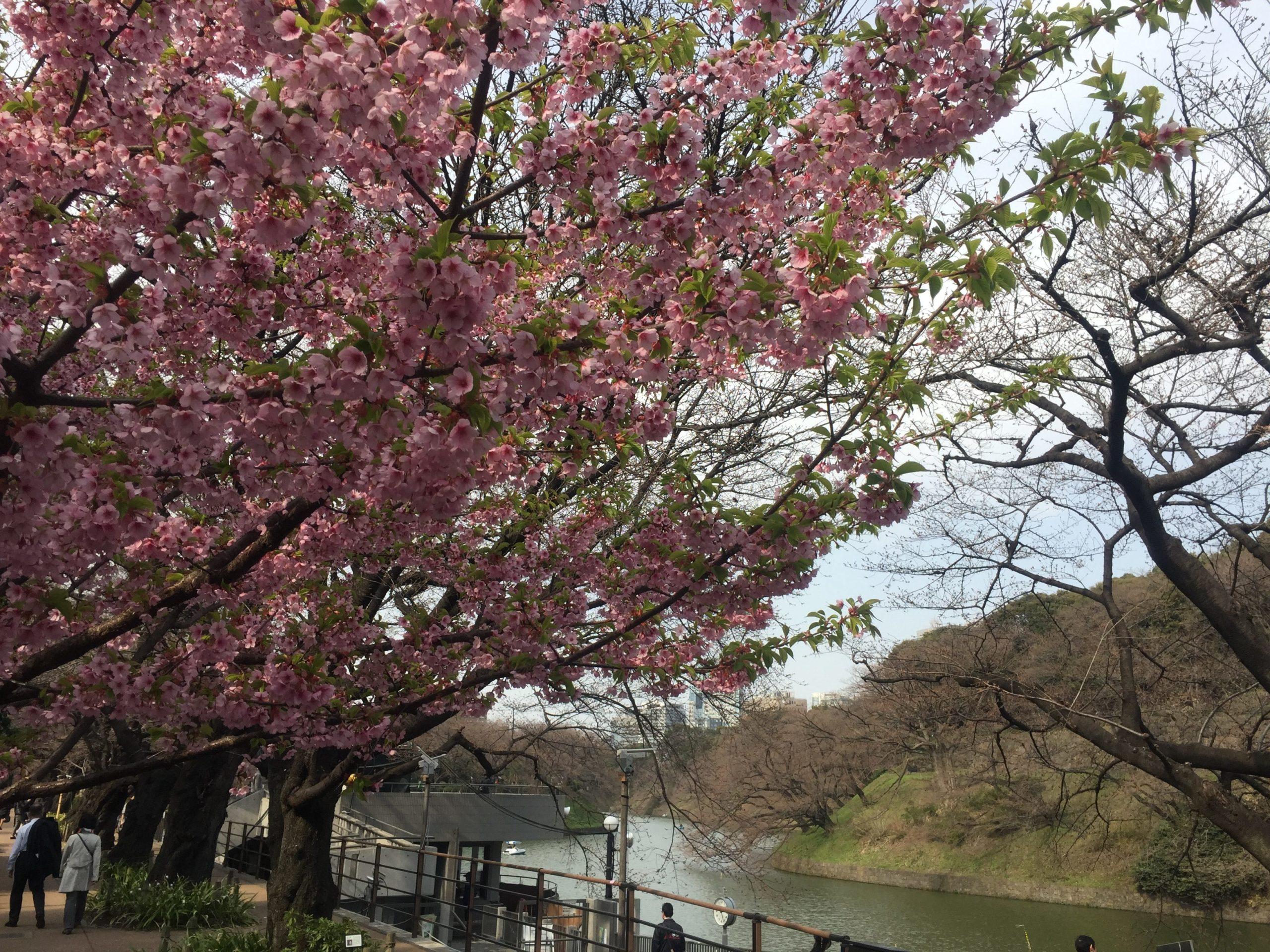01-2 三宅坂・千鳥ヶ淵散歩 写真