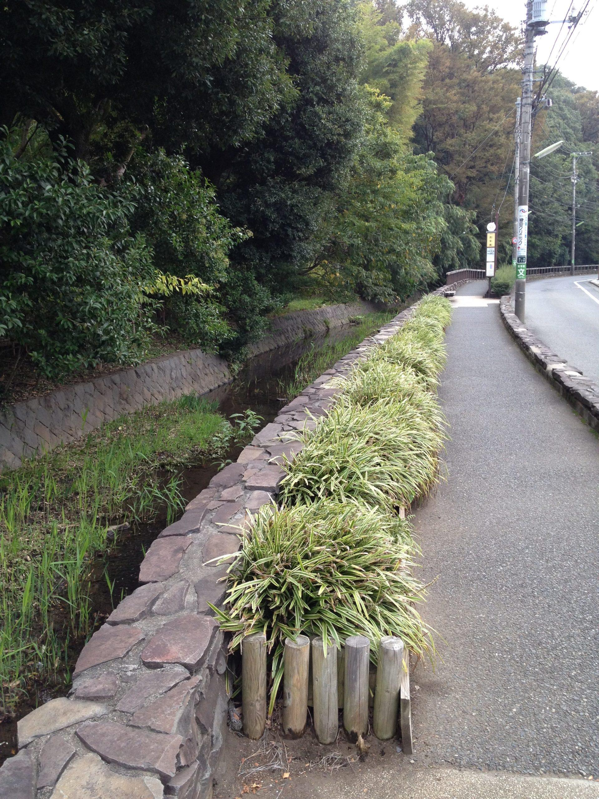 13-4 静嘉堂わき水散歩 写真
