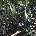 伊豆山神社 ハイキング路02