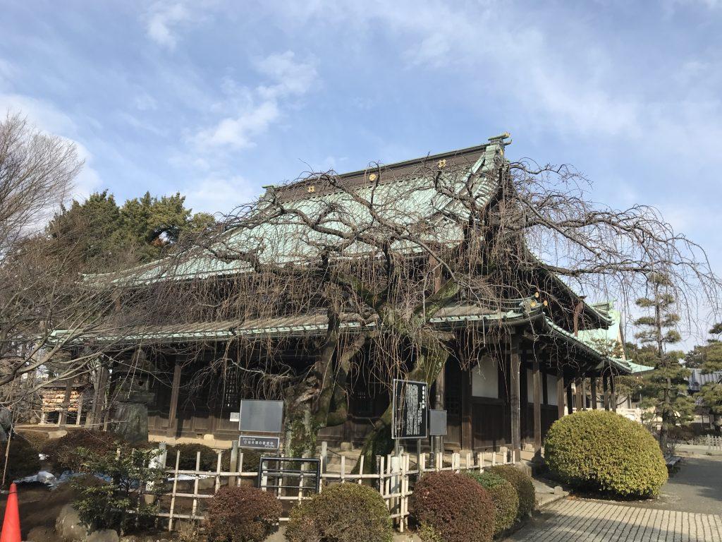 豪徳寺 仏殿
