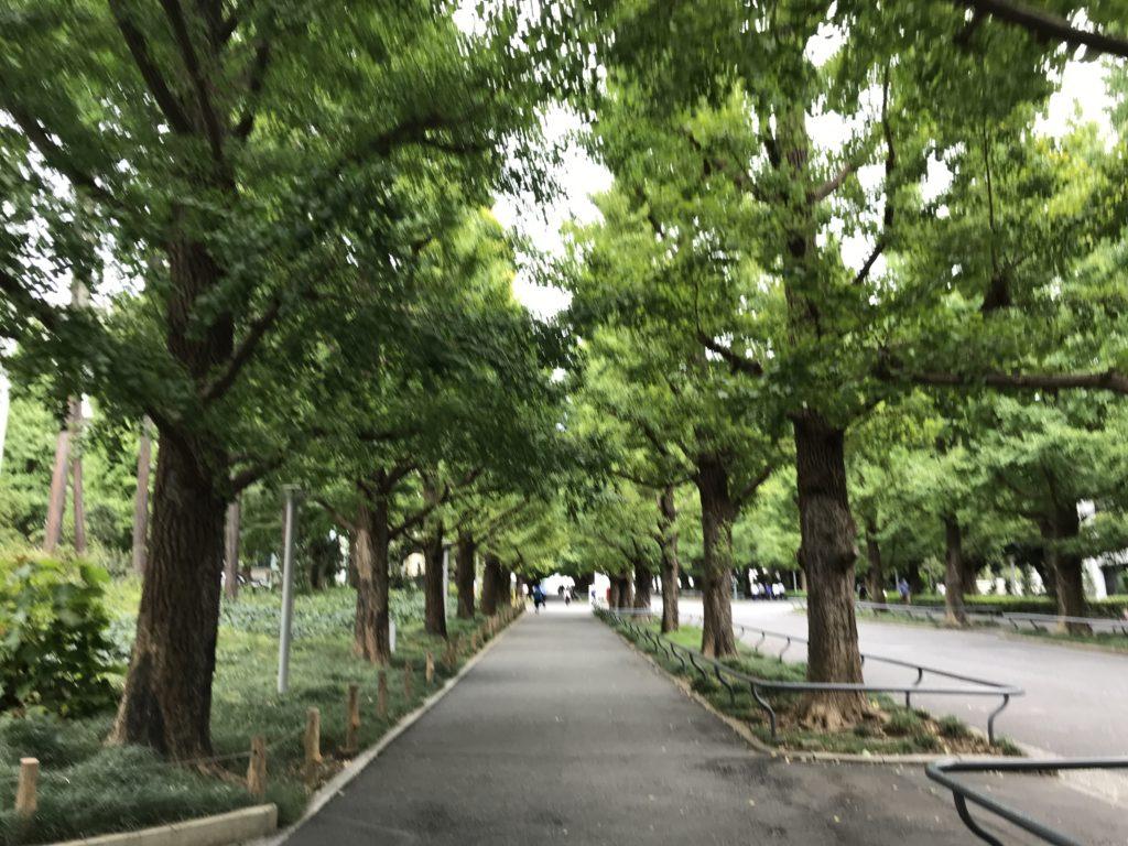 MG13_慶應義塾大学銀杏並木